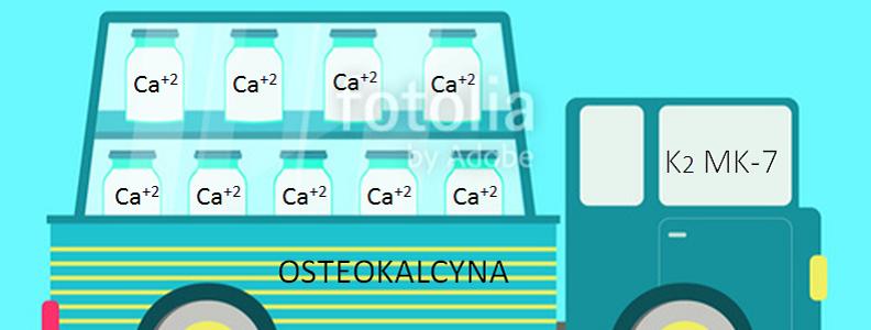 Osteokalcyna a witamina K